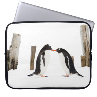 Kissing Penguins in Antarctica - Laptop case Laptop Computer Sleeve
