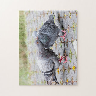 Kissing pigeons jigsaw puzzle