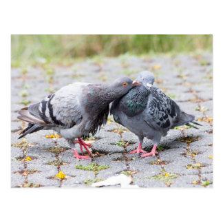 Kissing pigeons postcard