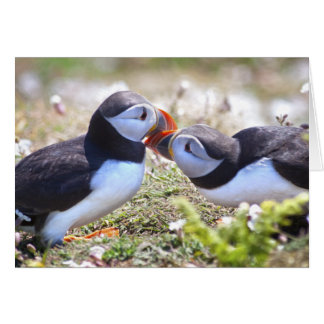 Kissing Puffins Card