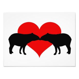 Kissing Tapirs Photo