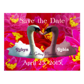 Kissing White Pink Swans Save the Date Postcard