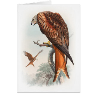 Kite Glead Hawk John Gould Birds of Great Britain Card