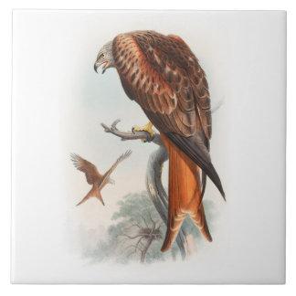 Kite Glead Hawk John Gould Birds of Great Britain Ceramic Tile