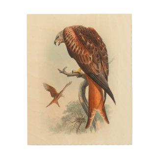 Kite Glead Hawk John Gould Birds of Great Britain Wood Prints