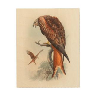 Kite Glead Hawk John Gould Birds of Great Britain Wood Wall Art