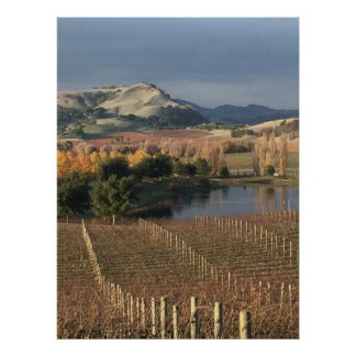 KIte Hill and vineyard Poster