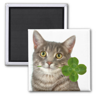 Kitten and four leaf clover square magnet
