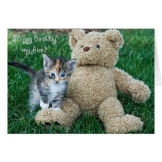 Kitten and Teddy Friends Cards
