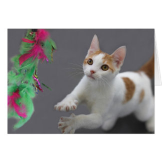 Kitten Birthday Card by Focus for a Cause