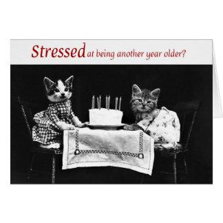 Kitten Birthday Greeting Card