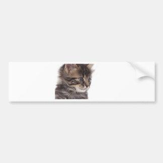 kitten bumper sticker