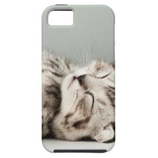 kitten, cat, cute tabby cat, cute cats, cute kitte iPhone 5 cover