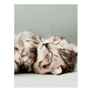 kitten, cat, cute tabby cat, cute cats, cute kitte postcard