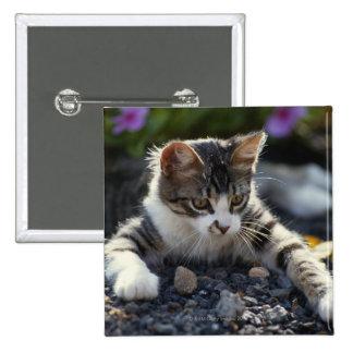 Kitten, close-up 15 cm square badge