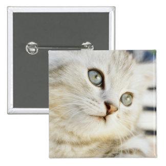 Kitten, close-up 2 15 cm square badge