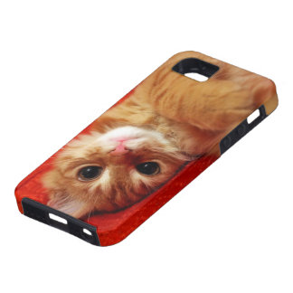 kitten design iPhone 5 cover