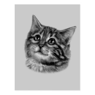 Kitten Drawing Postcard