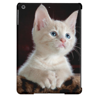 KITTEN: ENTRANCING MOMENT ~ iPad AIR CASE