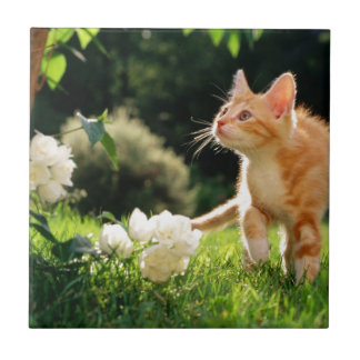 Kitten Exploring Outside by some Flowers Small Square Tile