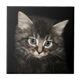 Kitten face small square tile