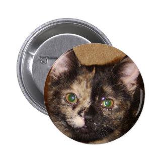 kitten face upclose button