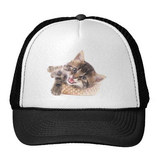 kitten mesh hats