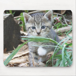 Kitten Hiding Behind Blade of Grass Mouse Pad