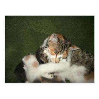 Kitten Hug Postcard