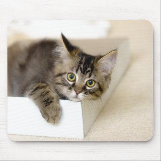 Kitten in a Box mousepad