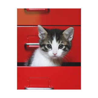 Kitten in a red drawer gallery wrapped canvas