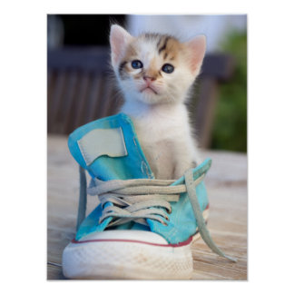 Kitten In A Shoe Poster