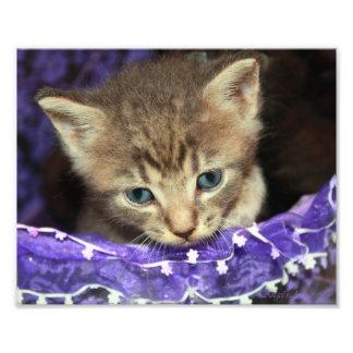 Kitten in an easter basket art photo