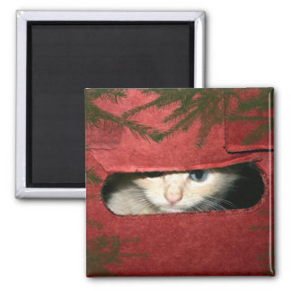 Kitten in Christmas box Magnet