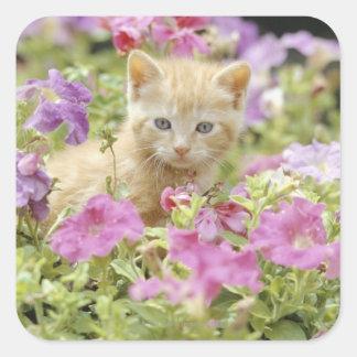 Kitten in flowers square sticker