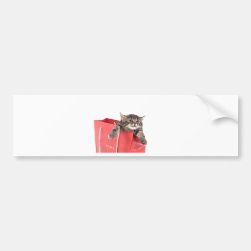 kitten in has bag red bumper stickers