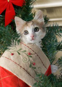 Kitten Christmas Cards.Cute Kitten Christmas Cards Zazzle Au