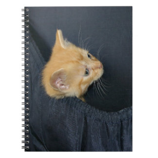 Kitten in suitcase spiral notebooks