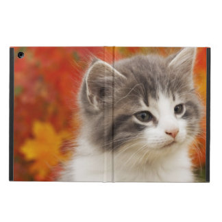 Kitten In The Fall Cover For iPad Air