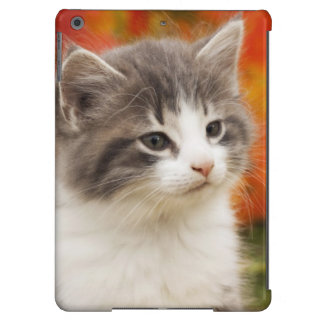 Kitten In The Fall iPad Air Cover