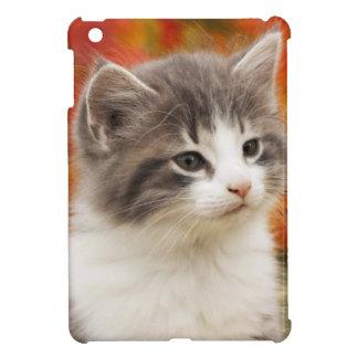 Kitten In The Fall iPad Mini Cover