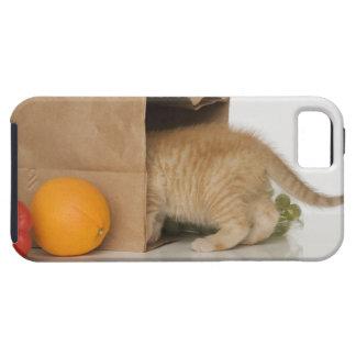 Kitten inside grocery bag iPhone 5 cover