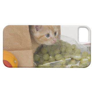 Kitten inside grocery bag iPhone 5 covers