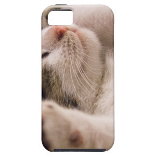 kitten iPhone 5 case