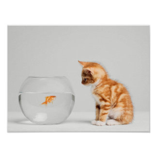Kitten Looking At Fish In Bowl Poster