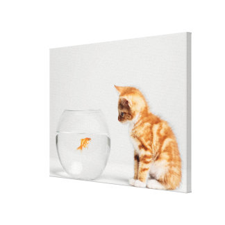 Kitten Looking At Fish In Bowl Stretched Canvas Prints