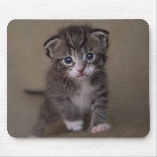 kitten mouse pad