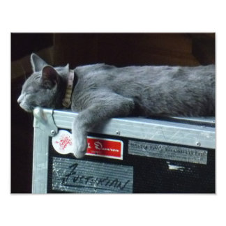 Kitten on a Road Case Photographic Print