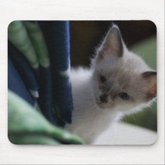 Kitten Peaking Mousepad