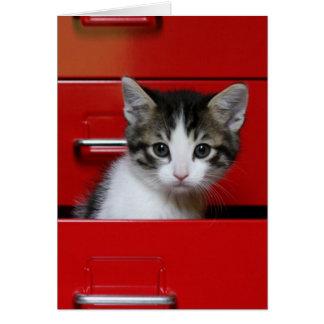 Kitten Peeking Card